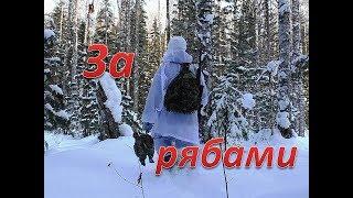 Охота на рябчика зимой февраль