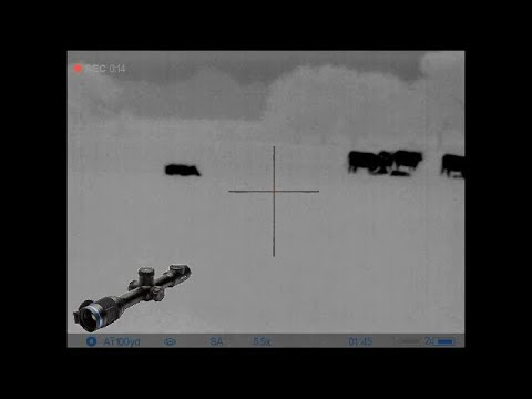 3 Shot Boar With Pulsar Thermion XM50 & 6.5 Grendel