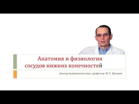 Анатомия и физиология сосудов ног (лекция для врачей)