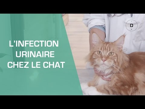 L'infection Urinaire Chez Le Chat - Animaux