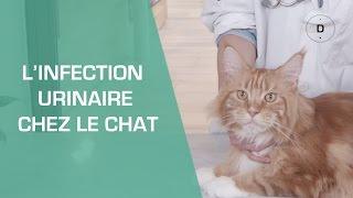 L'infection urinaire chez le chat - Animaux