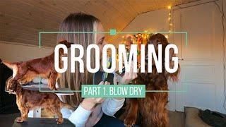 Grooming part 1  Blowdry  Irish Red Setter