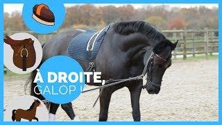 Longer son cheval : les bases 🐎 I À droite, galop ! 💥