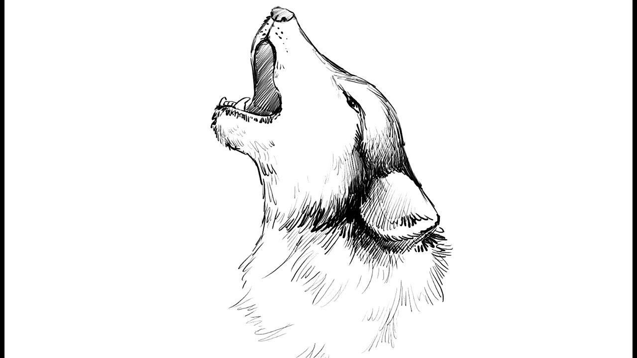 how to draw a howling wolf youtube