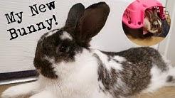 I Adopted a Bunny! | Lumos the Bun