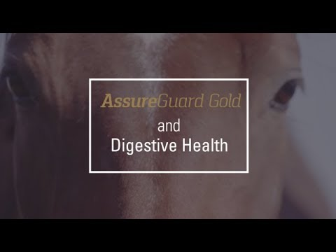 Assure Guard Gold and Digestive Health