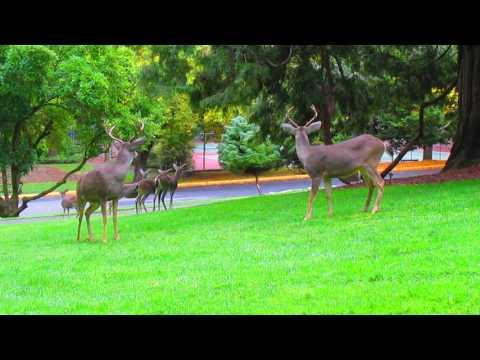 Deer at Lithia Park, Ashland, Oregon