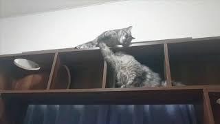 【あれ、いない?】ちょっかいをかけるも華麗にかわされる猫