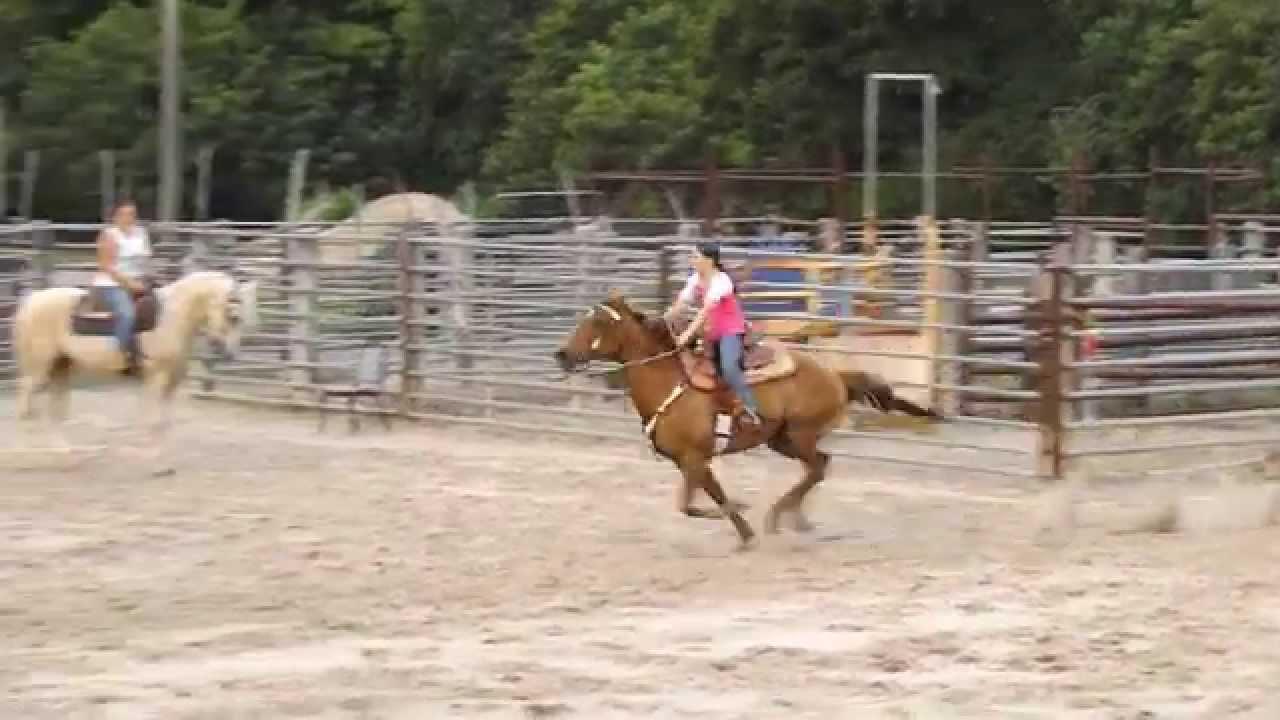 Hilason Saddle Broke