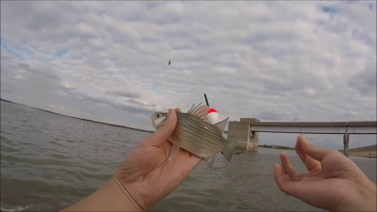Crappie fishing at smithville lake missouri youtube for Missouri out of state fishing license
