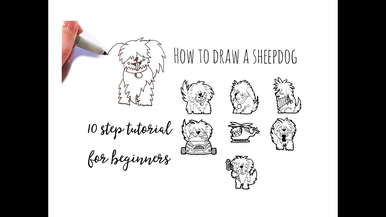 Drawing Tutorial How To Draw A Sheepdog In 10 Steps For Beginners