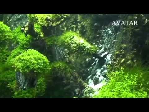 Avatar landscaping aquarium doovi Aquarium landscape