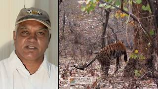 WILDERNESS DAYS - A Corridor For Tiger