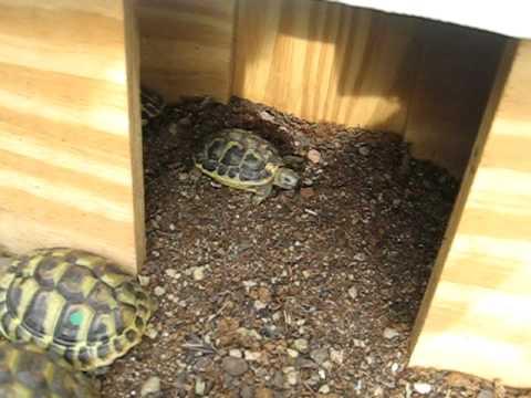 Tartarughe e il richiamo per la pappa youtube for Termoriscaldatore per tartarughe