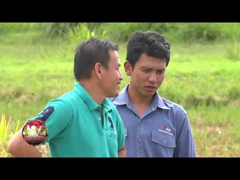 Nieuws 08 Nov  2017  Farmers Field School voor Suriname –Maleisie rijstproject