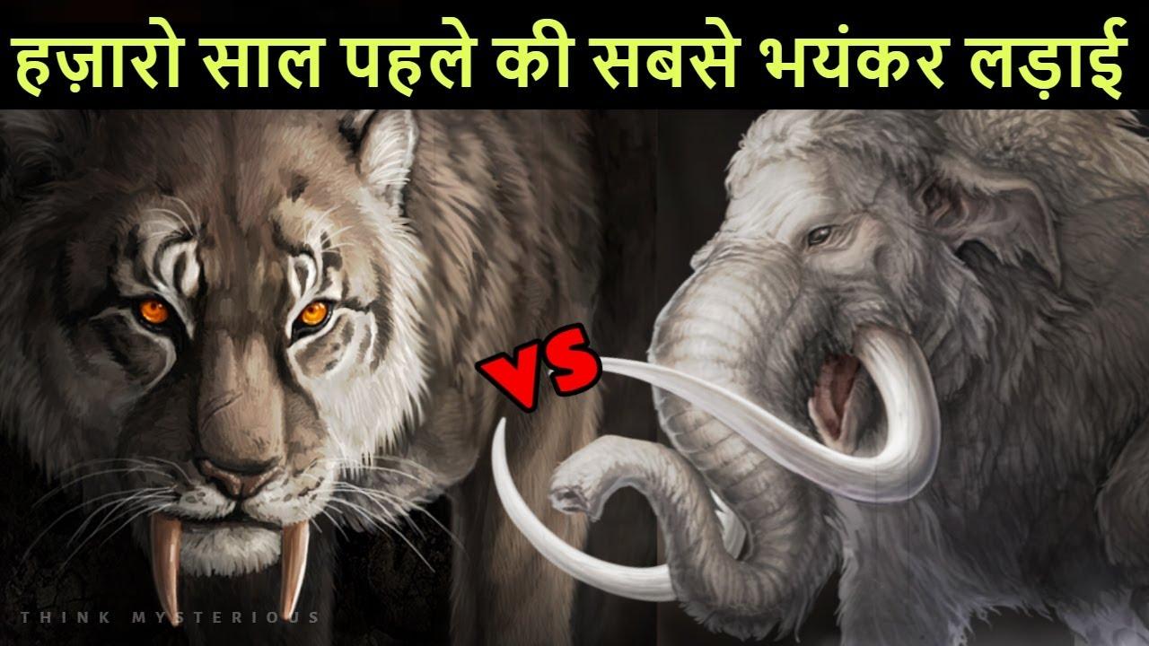 Sabertooth Tiger vs Mammoth दुनिया का सबसे खतरनाक शेर और सबसे विशाल हाथी की लड़ाई