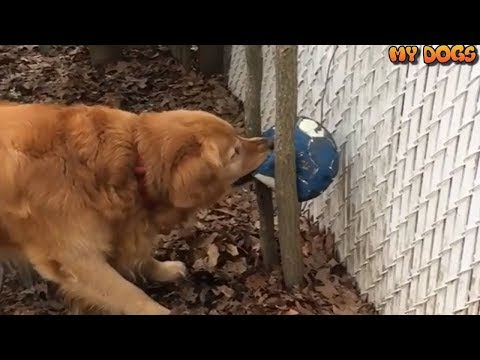 Smart Funny Dogs [HD]