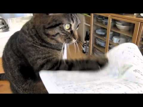 Katzen können sich aber auch mit allem beschäftigen