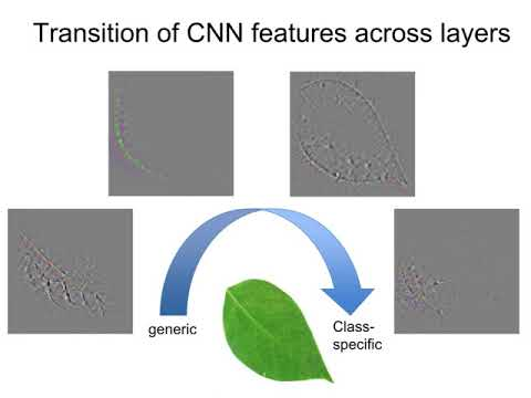 Plant Classification with Deep Learning
