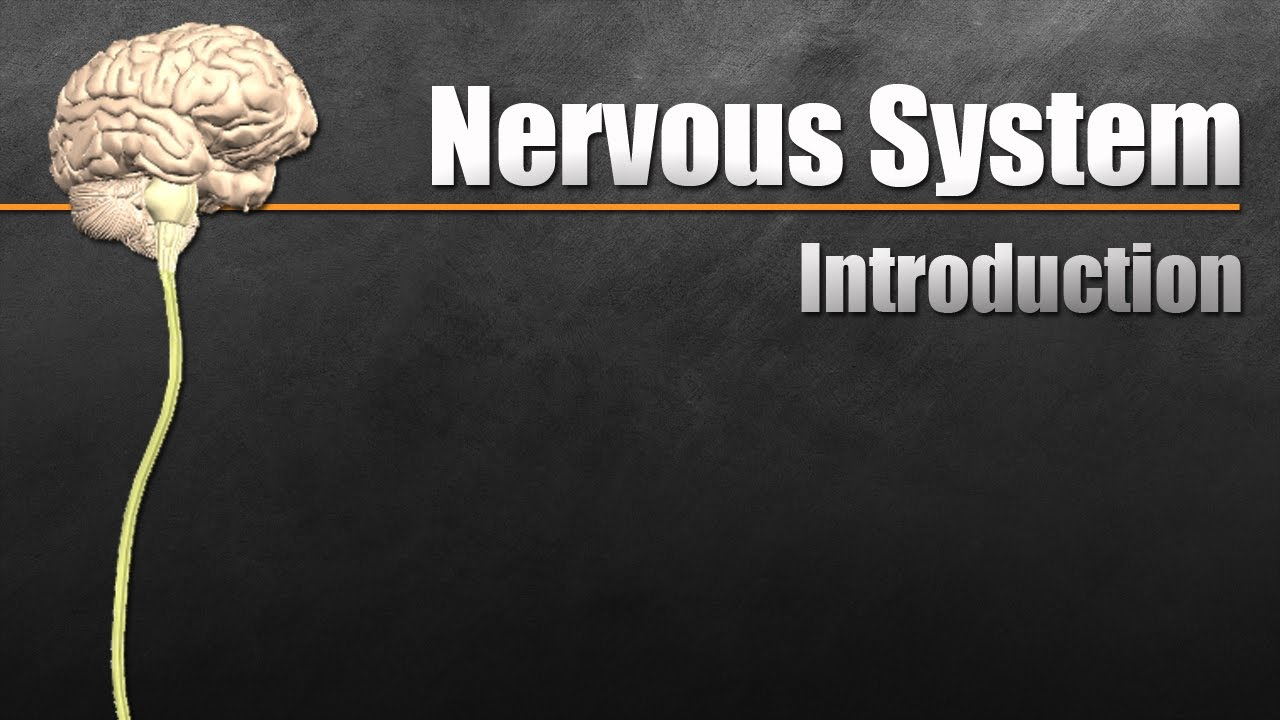The Nervous System In 9 Minutes - YouTube