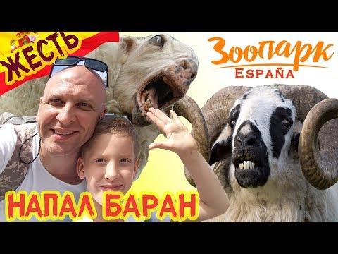 НАПАЛ БАРАН!! КУДА СХОДИТЬ с ДЕТЬМИ в БЕНИДОРМЕ ? Отдых в ИСПАНИИ. Экскурсия в Зоопарк Терра Натура