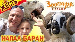 КУДА СХОДИТЬ с ДЕТЬМИ в БЕНИДОРМЕ ? | Отдых в ИСПАНИИ | Экскурсия в Зоопарк Терра Натура. Влог #84