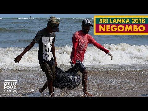 Sri Lanka   Negombo Fish Market