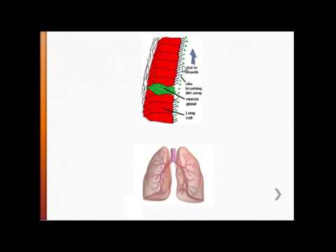 USMLE - Immunology - The Lungs, Respiratory Airways, & Alveolar Macrophages