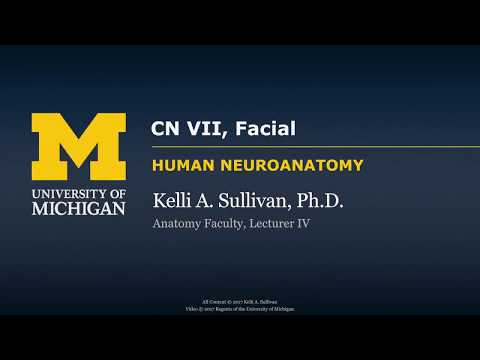 This is a demonstration of how to examine cranial nerve 7 (This is a demonstration of how to examine.