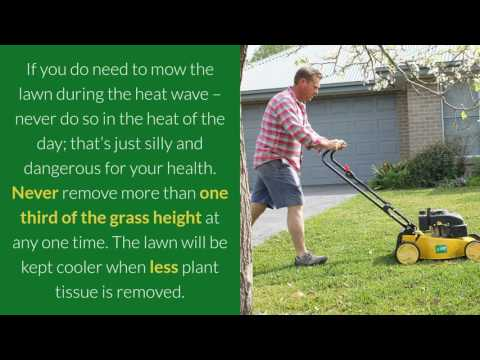 How to Not Stress About Your Lawn During a Heat Wave