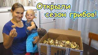 Собираем маслята. Поиски рыжиков и др. грибов. (08.18г.) Семья Бровченко.