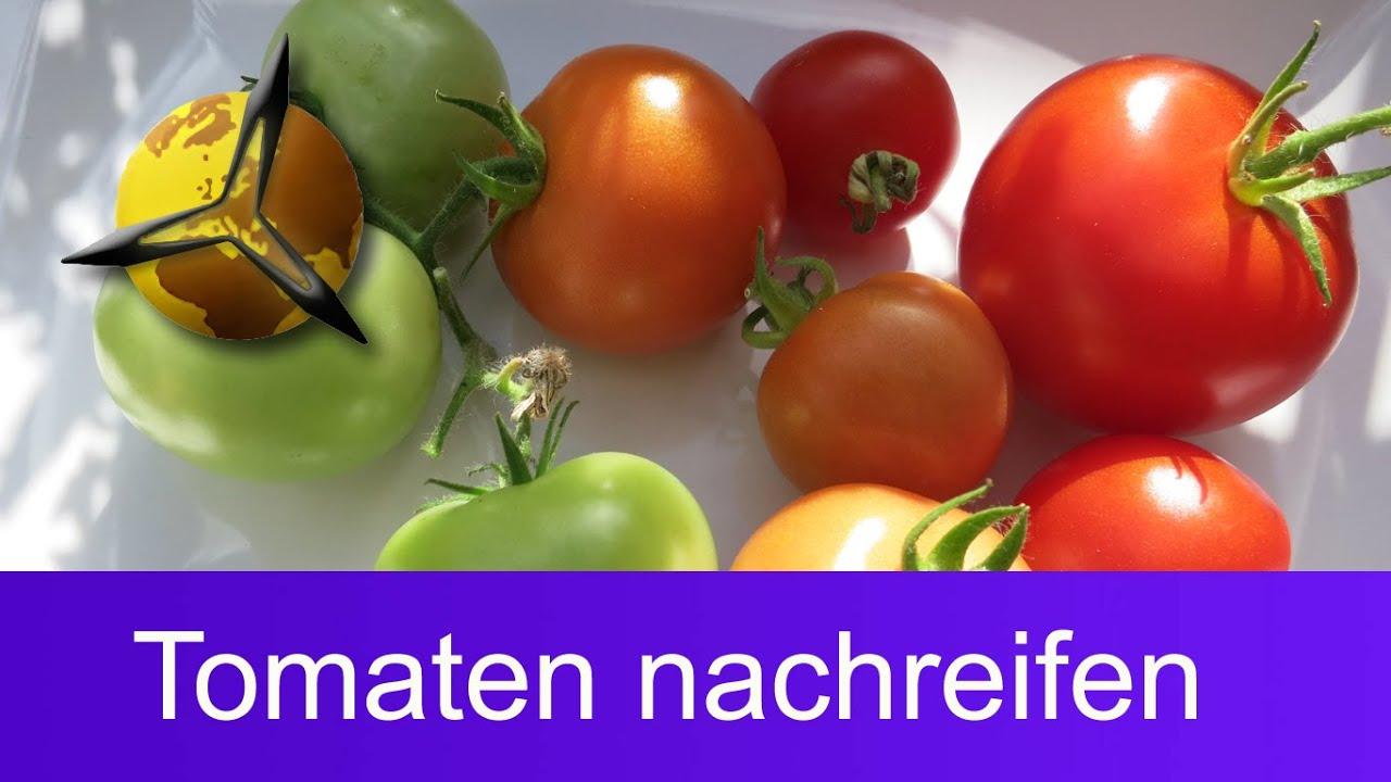 unreife gr ne tomaten nachreifen lassen youtube
