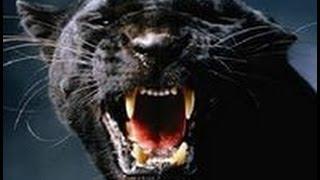 """""""ТОТЕМ""""-проявление энергии человека!Грубая энергия человека проявляется в виде священных животных!"""