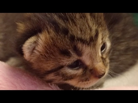 Kitten Close Up 2017-04-29