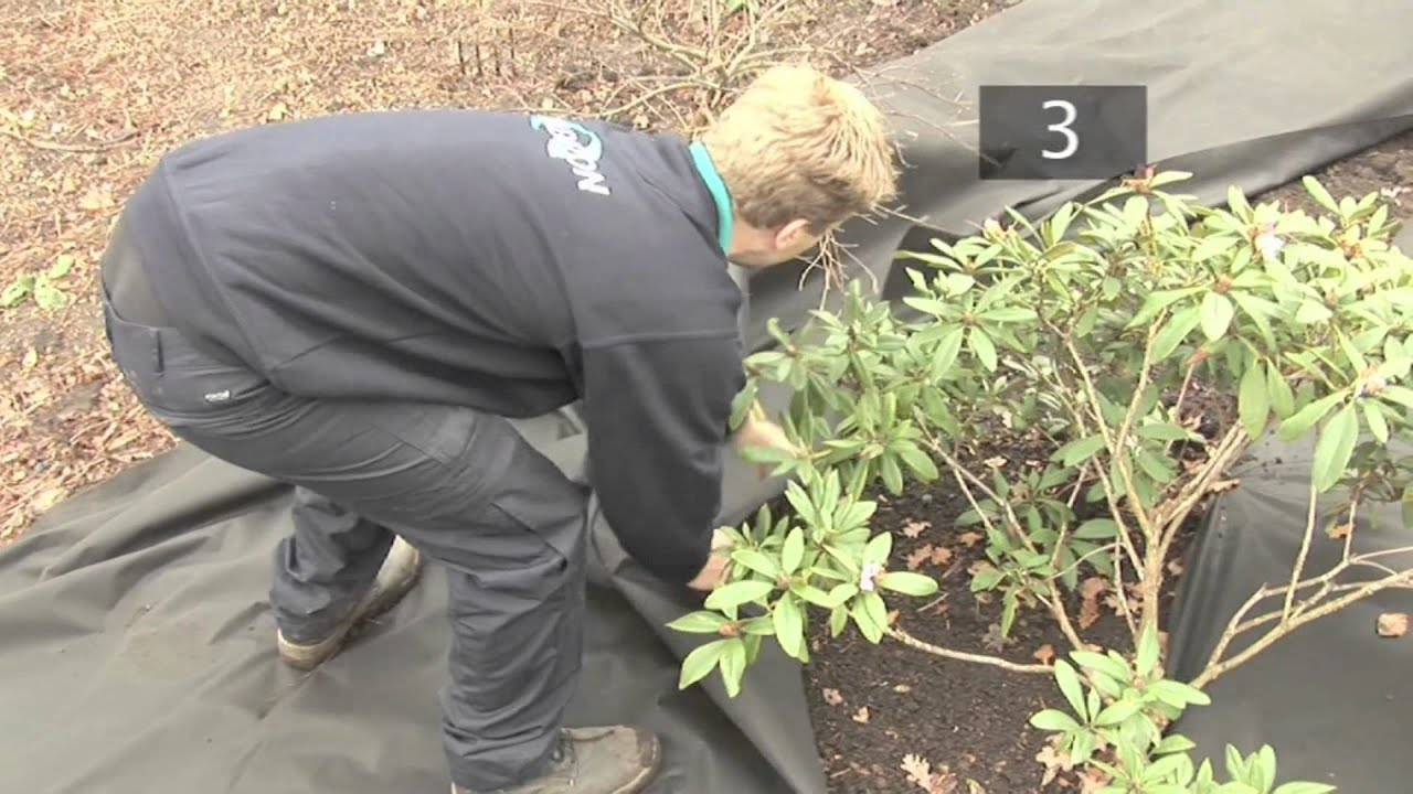 How To Stop Weeds Growing You