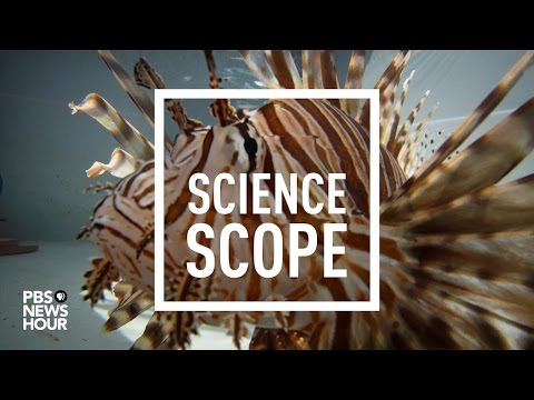 A robot to zap 'Darwin's nightmare,' the invasive lionfish