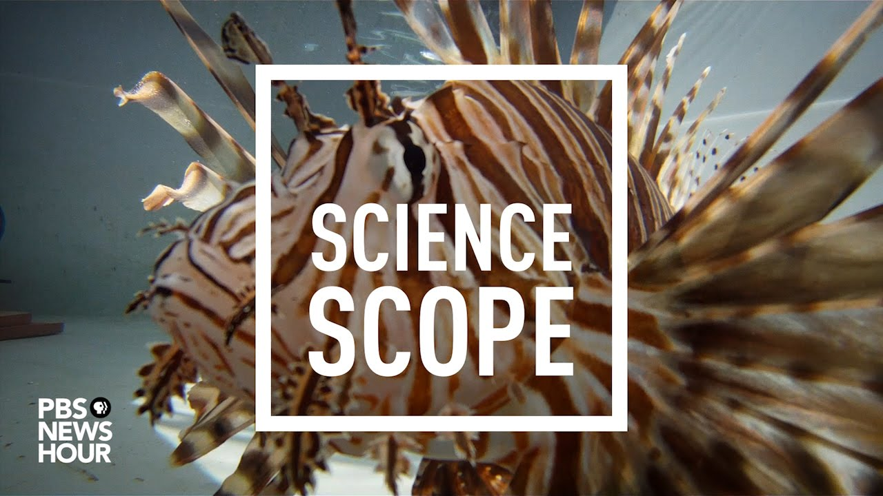 How do you stop invasive lionfish? Maybe with a robotic zapper | PBS