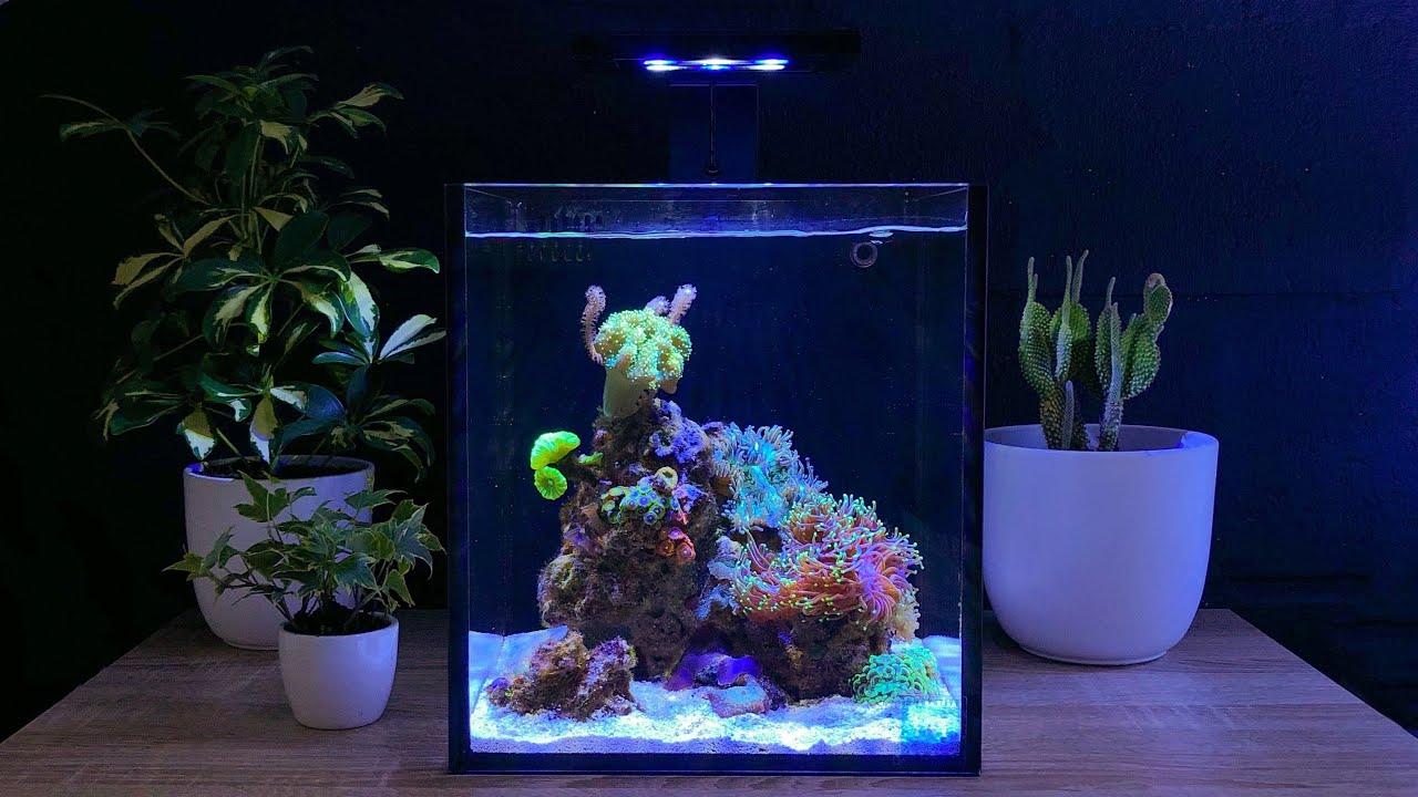 Nano Reef Tank Update Month Six (No Skimmer)