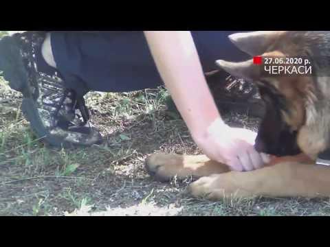 Телеканал АНТЕНА: Візьми собаку на роботу - рятувальники долучилися до всеукраїнської акції