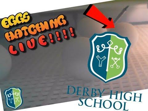 Derby High School - Eggs Hatching