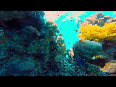 Snorkeling / Freediving In The Red Sea - Eilat, Israel