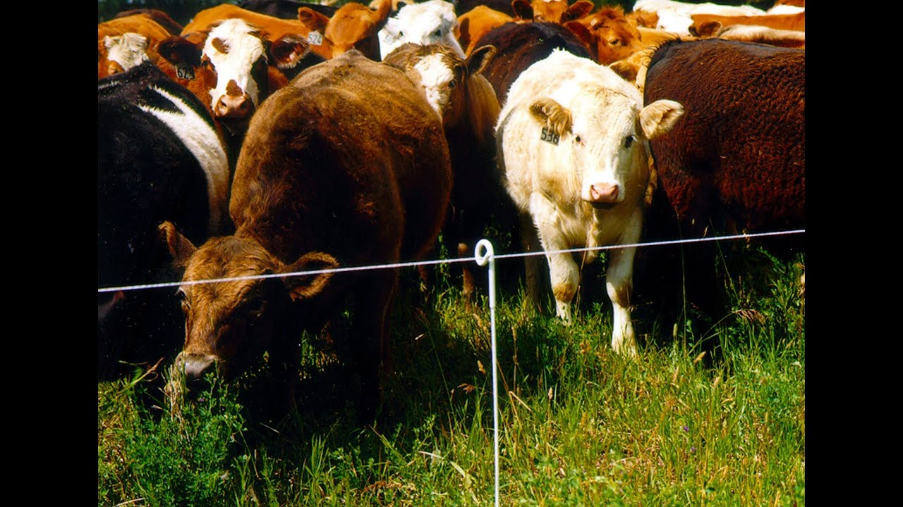 How a gallagher electric fence works? Why use electric fencing