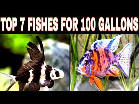 Top 7 Fishes For 100 Gallons Tank | Prathmesh Aquatics