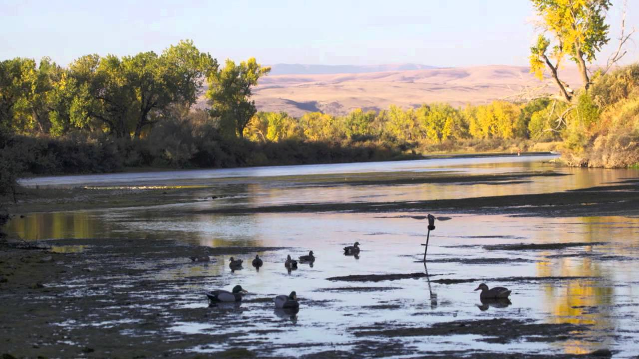 Montana duck and goose hunting youtube for Ohio out of state fishing license