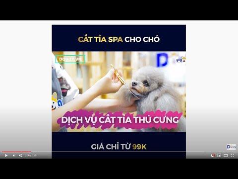 Dịch vụ Cắt tỉa lông chó mèo giá rẻ - Chỉ từ 99k tại Dogily Pet Spa & Grooming Tphcm, Hà Nội