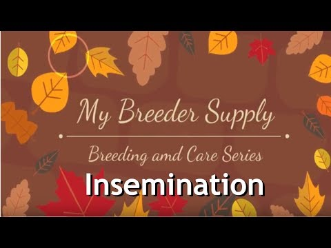 DIY, French Bulldog, How To Inseminate after collecting semen