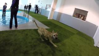 Paradise 4 Paws Denver Gopro Video