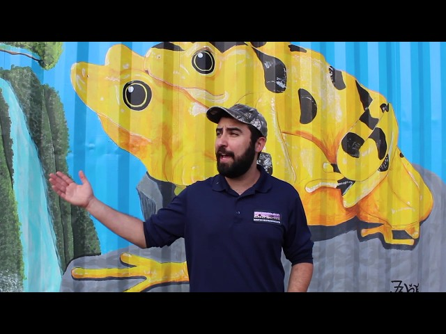 Detroit Zoo | National Reading Month: The Golden Frogs