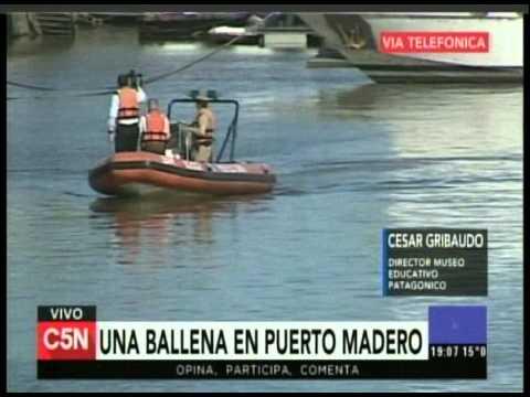 C5N - Sociedad: Una ballena en Puerto Madero (Parte 4)