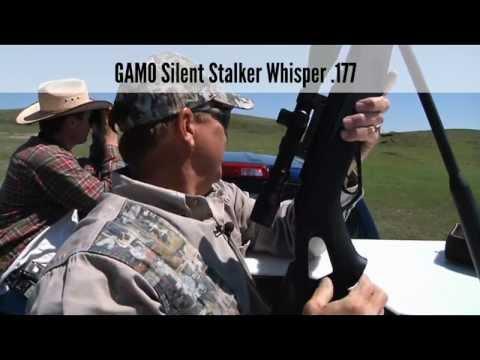 Prairie Dog Control With A GAMO Air Rifle